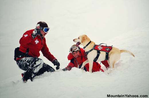 Avalanche Rescue Dogs