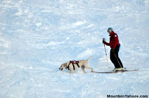 Avalanche Rescue Dogs - searching